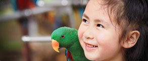 hand feed eclectus parrot at peel zoo